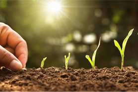 Les stimulateurs de la vie du sol
